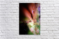 Abstract Macro Nature Photography 84  Acrylic Print