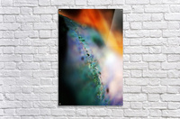 Abstract Macro Nature Photography 48  Acrylic Print