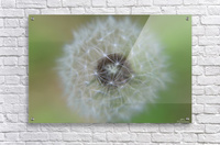 The Depth of a Wish  Acrylic Print
