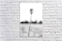 Just One  Acrylic Print