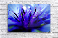 Abstract Pop Color Flower Photography 01  Acrylic Print