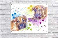 2 Colorful Dogs Brindle - Portrait of Emma and Louis  Acrylic Print