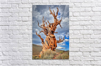 Great Witness of Time  Acrylic Print
