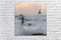 Thriving in chaos.  Acrylic Print