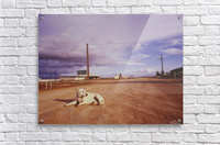 Lone dog in Outback town Australia  Acrylic Print