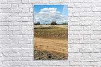 Stubble fields post harvest against blue sky and clouds.  Acrylic Print
