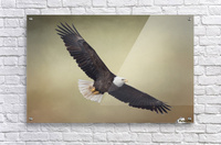 King of the Skies Acrylic Print