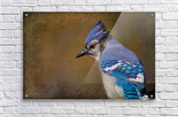Blue Jay with texture Acrylic Print