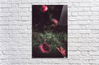 Redness  Acrylic Print