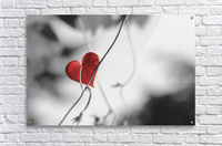 Red heart shaped leaf  Acrylic Print