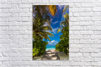 Palm trees low angle view  Acrylic Print