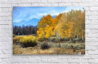 Fall Holdouts in Jackson Hole  Acrylic Print