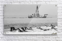 Seals by Oil Drill   Acrylic Print