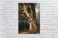 An oaktree trunk  Acrylic Print