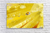 Yellow Flowers Reflected In Dew Drop  Acrylic Print