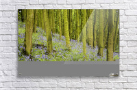 Bluebell Wood Impression  Acrylic Print