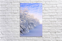 Covered In Snow  Acrylic Print