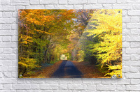 Rural Road, Argyll And Bute, Scotland  Acrylic Print