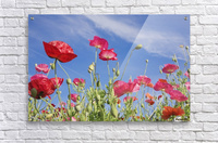 Red Flowers Against Blue Sky  Acrylic Print