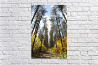 Path Through A Forest In Autumn; Sault St. Marie, Ontario, Canada  Acrylic Print