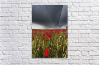 A Field Of Red Poppies Under A Dark Stormy Sky; Northumberland, England  Acrylic Print