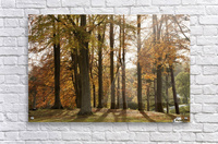 Trees In Autumn Colours Casting A Shadow On The Ground; Northumberland, England  Acrylic Print