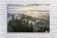 Fog and forest seen from Coxcomb Hill; Astoria, Oregon, United States of America  Acrylic Print