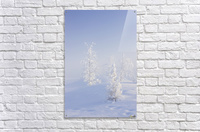 Scenic view of Birch trees in fog at sunrise, North Pole, Interior Alaska, Winter  Acrylic Print