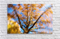 Autumn season in the middle of forest with colourful leaves  Acrylic Print
