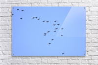 Flock of Geese 2  Acrylic Print