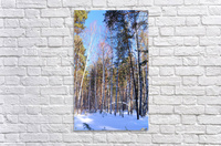 Winter. Forest. Shadow  Acrylic Print