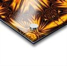 Golden Dandelion Acrylic print