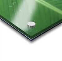 Close-Up Detail Green Banana Leaf With Droplets Of Water, Dew Acrylic print