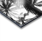 Low angle view of coconut palm trees in black and white; Honolulu, Oahu, Hawaii, United States of America Acrylic print