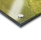 Fish Pond Algae Acrylic print