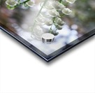 Thrush Flowers Acrylic print