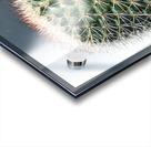 closeup green cactus texture with morning sunlight Acrylic print