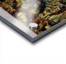 Ang Publema ni Mr. Kebab (Mr. Kebab's Dilemma) Acrylic print