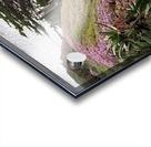 Nature Creates Acrylic print