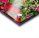 Flowers Growing in a garden Acrylic print