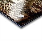 Jaguar Guyana Acrylic print