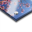 Anime cherry blossom xx Acrylic print