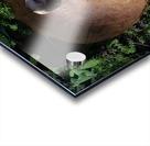 Mushroom Acrylic print