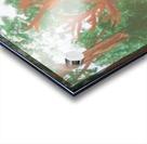 Maine Elk Acrylic print