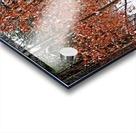 Fall Beech Trees Acrylic print