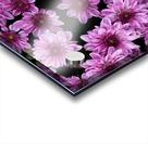 Purple flowre Acrylic print