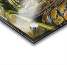 Box Turtle Acrylic print