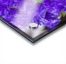 Purple Statice Flower Acrylic print