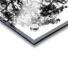 Tree Top Acrylic print