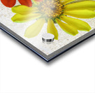 Pale yellow sea glass and zinnias Acrylic print